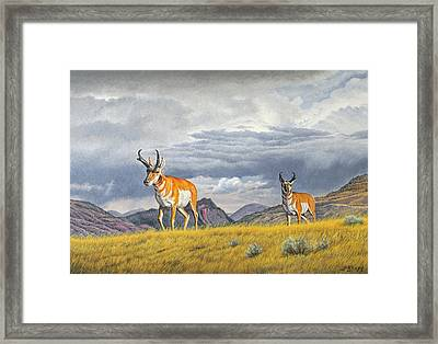 Pronghorn-coming Over The Rise Framed Print by Paul Krapf