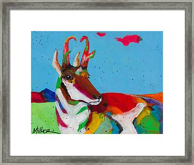 Pronghorn Pretty Framed Print by Tracy Miller