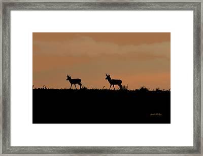 Pronghorn Sunrise Framed Print