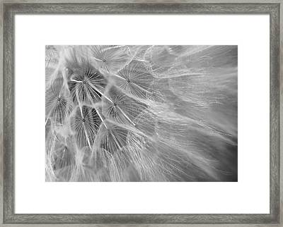 Propagation Framed Print