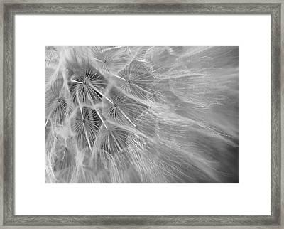 Propagation Framed Print by David Andersen