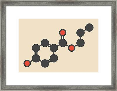 Propyl Paraben Preservative Molecule Framed Print by Molekuul