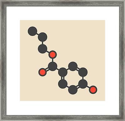 Propylparaben Preservative Molecule Framed Print