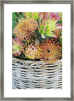 Protea Basket Framed Print by Neil Overy