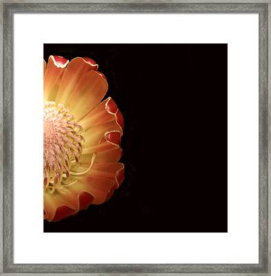 Protea Center 2 Right Framed Print