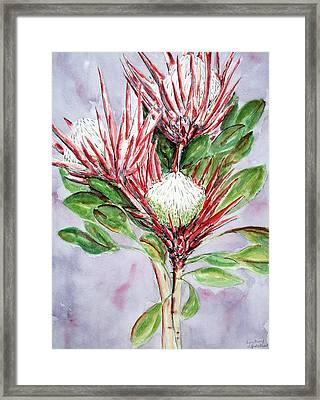 Proteas Framed Print