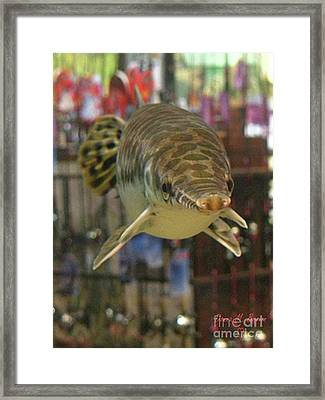Framed Print featuring the photograph Protected Gar by Donna Brown