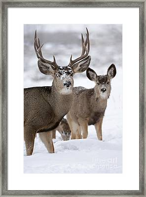 Protected Framed Print by Wildlife Fine Art