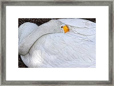 Protecting Her Nest By Diana Sainz Framed Print by Diana Sainz