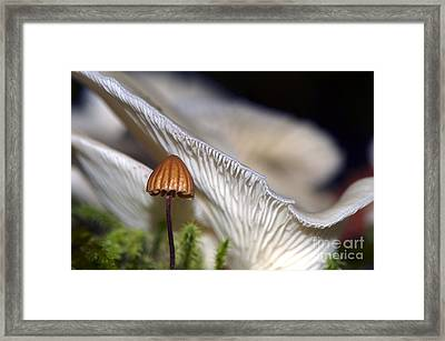 Protection Framed Print by Sharon Talson