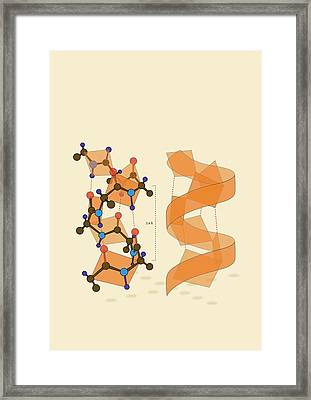 Protein Alpha Helix Structure Framed Print by Ramon Andrade 3dciencia