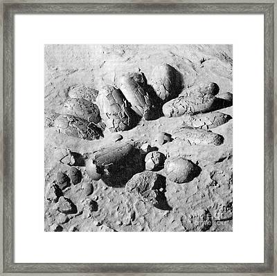 Protoceratops Eggs Cretaceous Dinosaur Framed Print by Science Source
