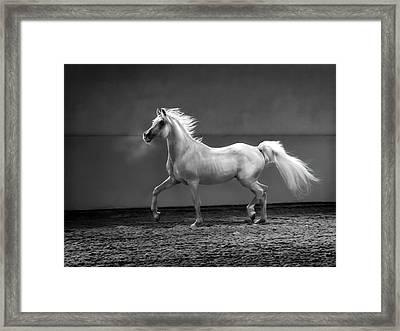 Proud Arabian Horse - Stallion In Framed Print by Kerrick