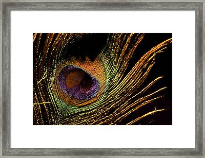 Proud Feather 1 Framed Print by Sarah Longes