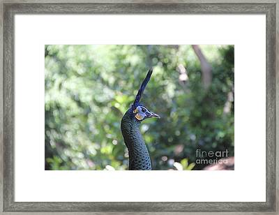 Proud Framed Print by Jackie Mestrom