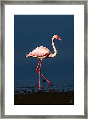 Proud Framed Print by Jeppsson Photography
