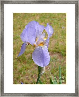 Proud Lily Framed Print