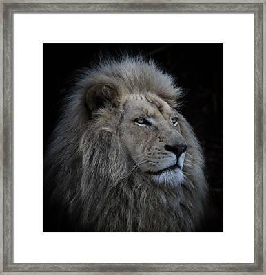 Proud Lion Framed Print