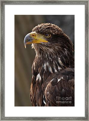 Proud Look Framed Print by Simona Ghidini