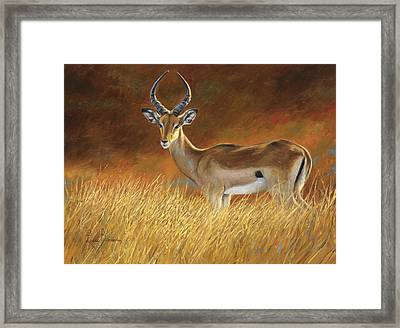 Proud Male Framed Print by Lucie Bilodeau