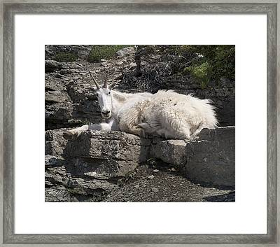 Proud Mama Framed Print