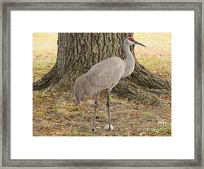 Proud Of First Egg Framed Print by Zina Stromberg