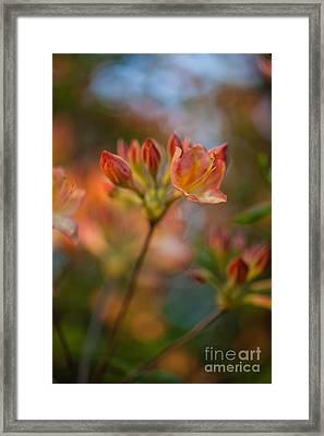 Proud Orange Blossoms Framed Print by Mike Reid