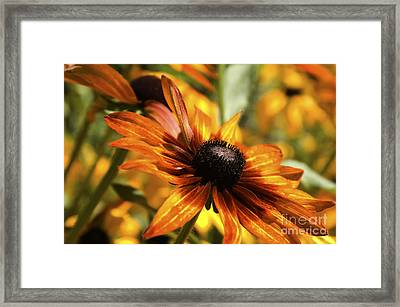 Proud Orange Framed Print