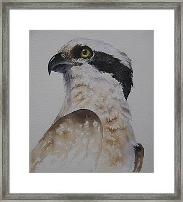 Proud Osprey Framed Print