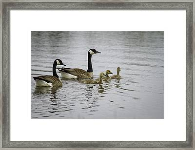 Proud Parents Framed Print by Thomas Young