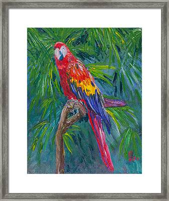Proud Parrot Framed Print