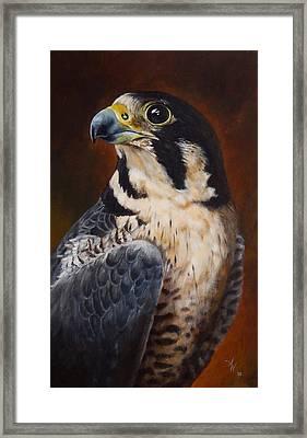 Proud - Peregrine Falcon Framed Print