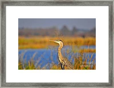 Proud Profile Framed Print