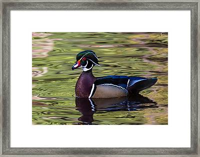 Proud Framed Print by Randy Hall