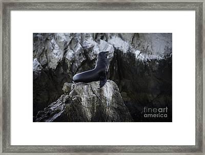 Proud Framed Print by Richard Mason