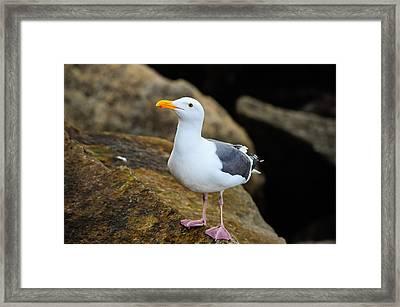 Proud Seagull Framed Print