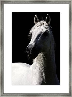 Proud Stallion Framed Print