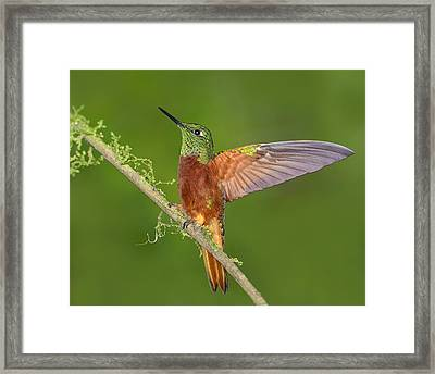 Proud Framed Print by Tony Beck