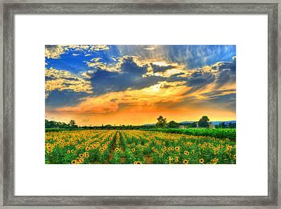 Provence Lights Framed Print by Midori Chan