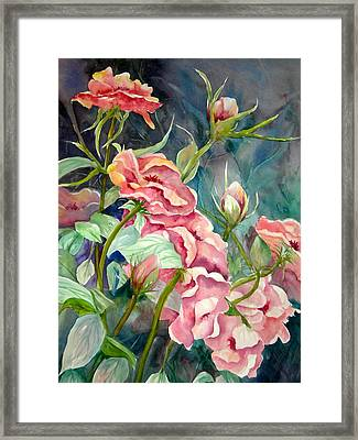 Provence Roses Framed Print by Becky Taylor