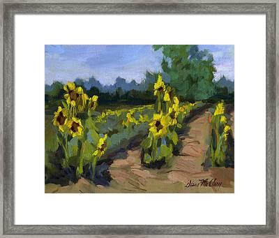 Provence Sunflower Field Framed Print