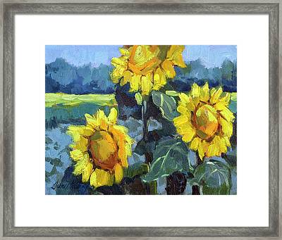 Provence Sunflower Trio Framed Print by Diane McClary