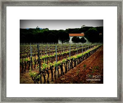 Provence Vineyard Framed Print by Lainie Wrightson