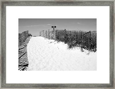 Provincetown Dunes On Cape Cod Framed Print by Caroline Stella