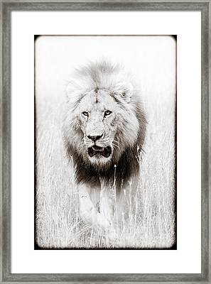 Prowling For Prey Framed Print by Mike Gaudaur