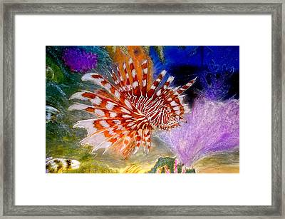 Prowling The Reef Framed Print by Hank  Bufkin