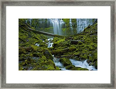 Framed Print featuring the photograph Proxy Falls by Nick  Boren