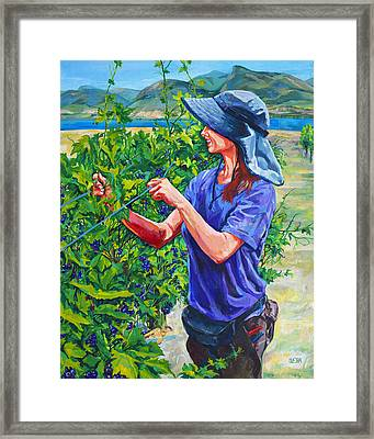 Pruning The Pinot Framed Print by Derrick Higgins