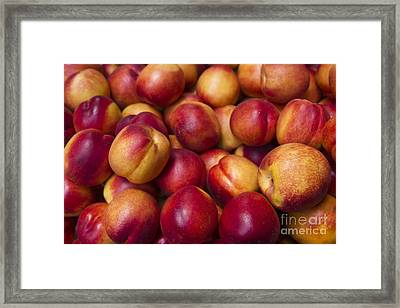 Framed Print featuring the photograph Prunus Domestica by Mohamed Elkhamisy