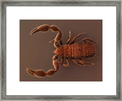 Pseudoscorpion (sem) Framed Print by Power And Syred